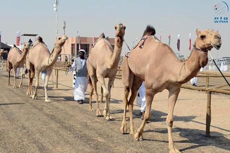 Tadweer to clean at Abu Dhabi heritage festival