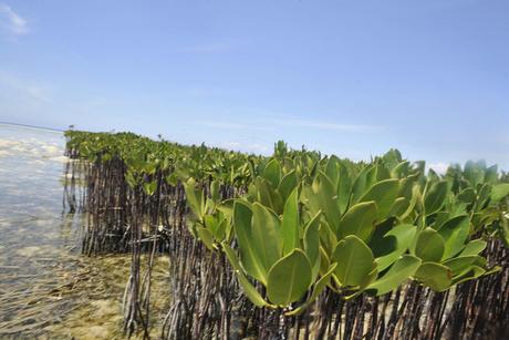 Saudi Aramco to build mangrove eco-park