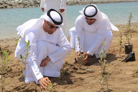 UAE climate change ministry plants 2,500 mangrove seedlings