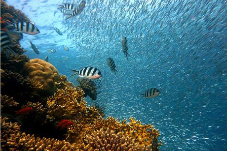Bahrain eyes robotic development of artificial reef in Arabian Gulf