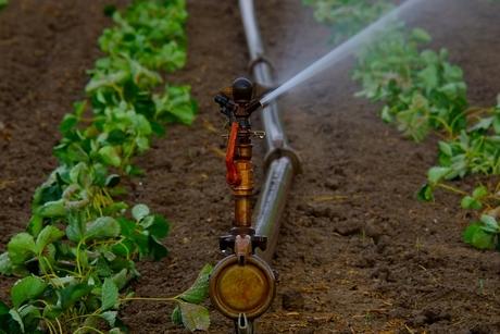 Abu Dhabi's ADDC to supply recycled water to Saadiyat Island