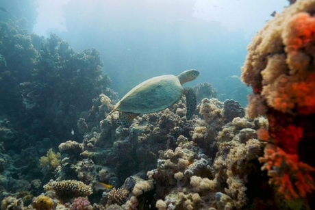 TRSDC launches programme to protect endangered turtles