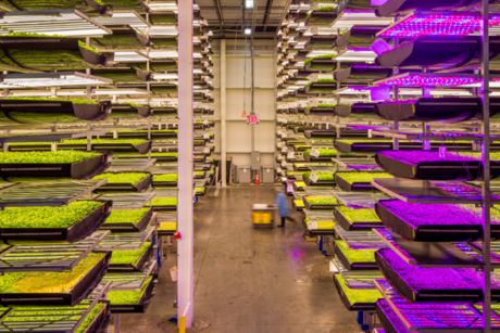 AeroFarms to build world's largest indoor vertical farm in Abu Dhabi