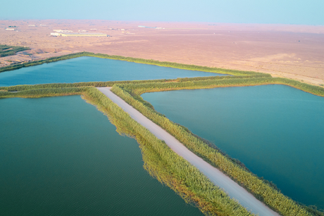 Shurooq, BESIX JV to expand Sharjah wastewater treatment plant