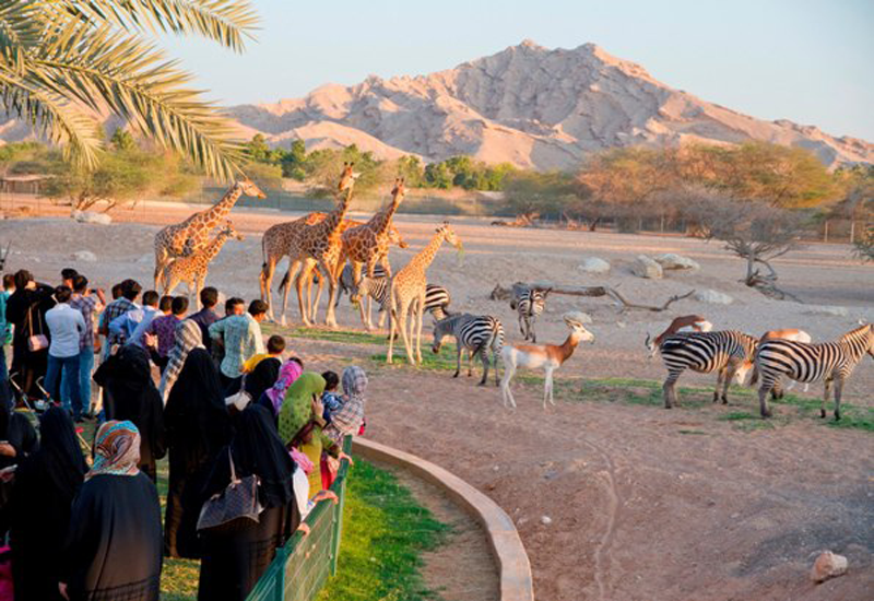 Al Ain Zoo is located in the foothills of the Jebel Hafeet Mountains in the UAE.