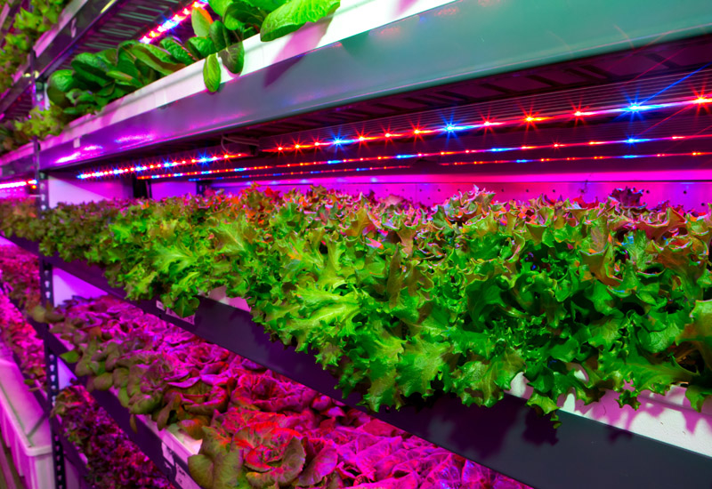 The $40m indoor farm will grow leafy greens for airline passengers.