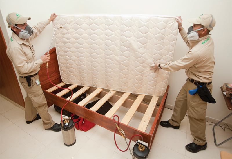 Workers from National Pest Control inspect a mattress for bed bugs.