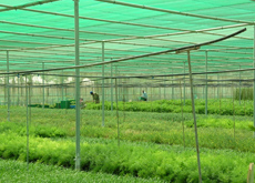 Citiscape planning to replicate its Abu Dhabi nursery in Egypt.