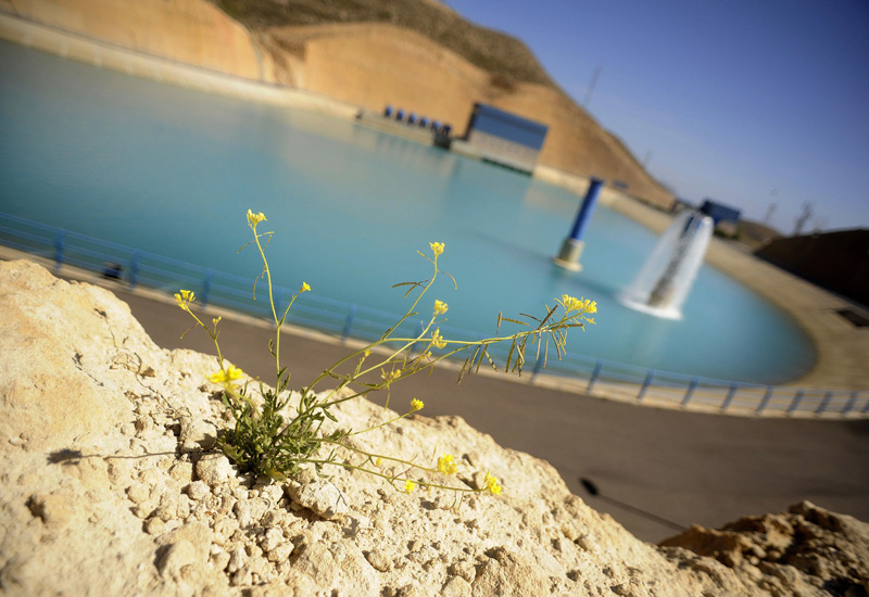 Water production at ACWA Power Barka's Oman plants has been impacted by an algal bloom [representational image].