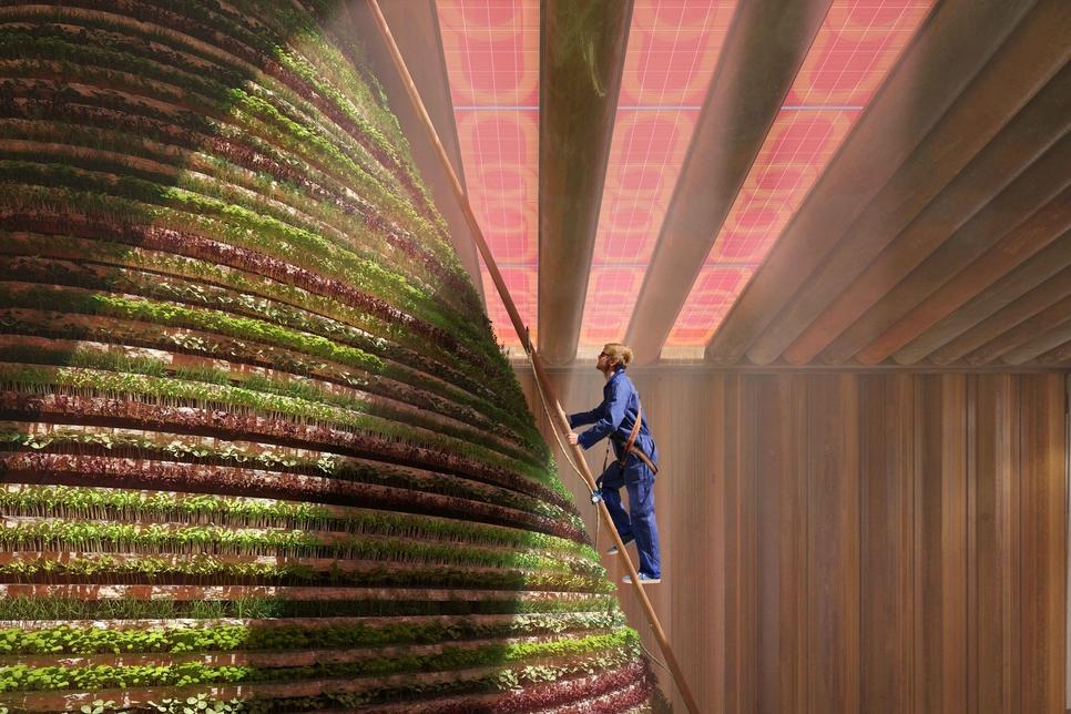 The Dutch Pavilion at Expo 2020 Dubai will grow mushrooms and create artificial rain [image: supplied].