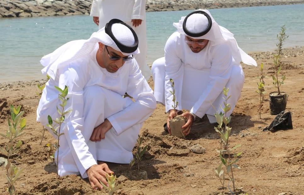 2,500 mangrove seedlings were planted in Fujairah.