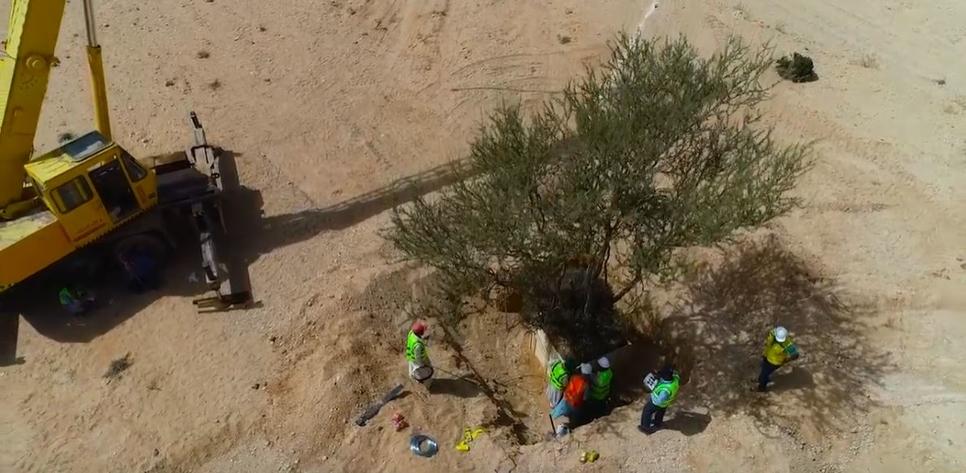 Saudi's Qiddiya to replant 40 trees on site