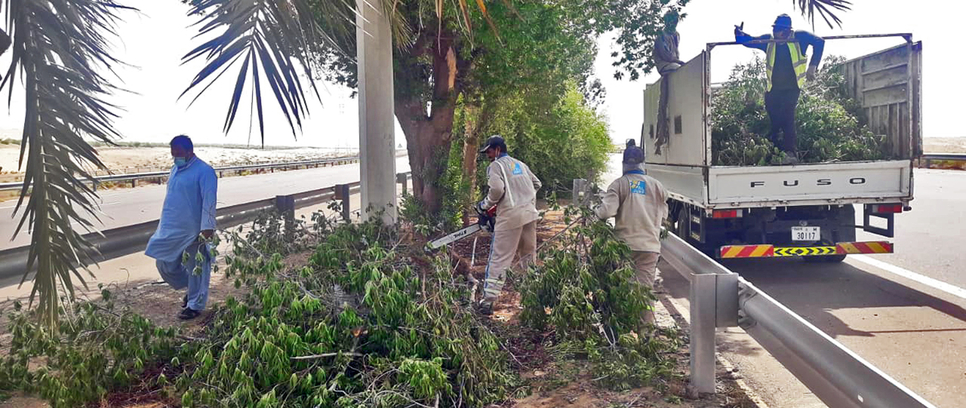 ADM trims more than 8,247 trees for road safety, beautification