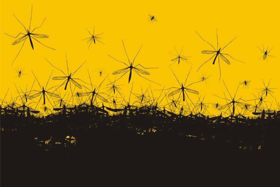 UAE's FM sector looks to standardise pest control