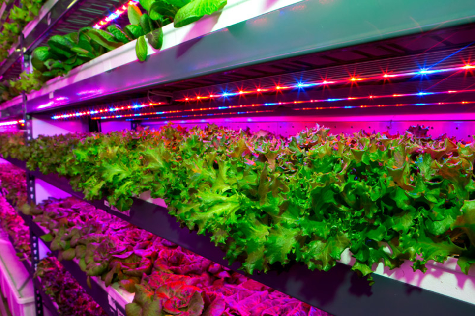 Emirates to build 'world's largest' vertical farm in Dubai