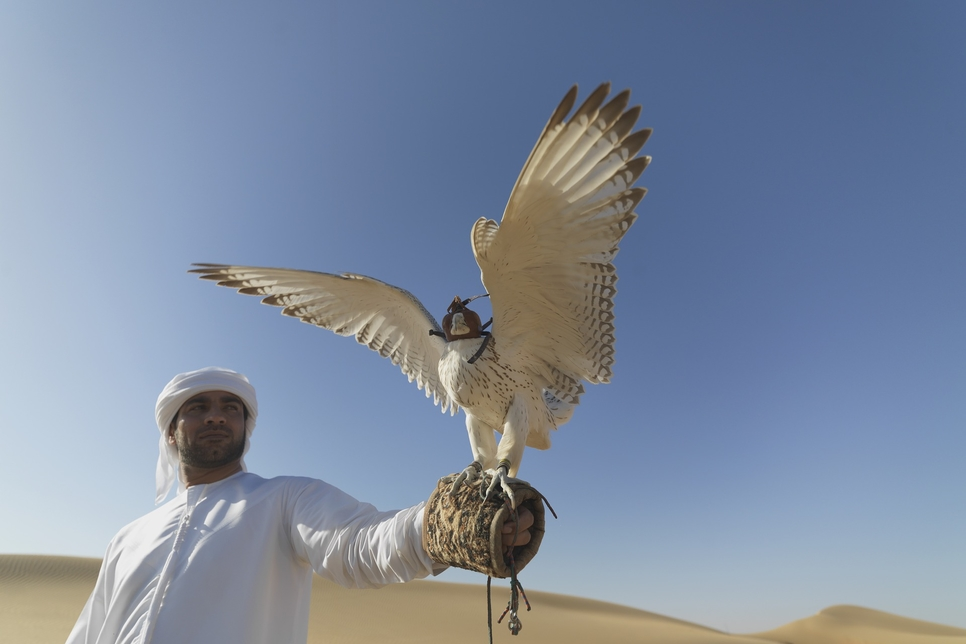 VIP hub built for Saudi Arabia's King Abdul Aziz Falconry Festival