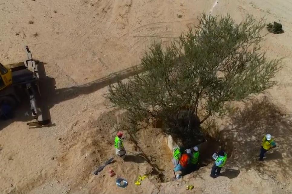 VIDEO: Saudi's Qiddiya to replant 40 trees on site